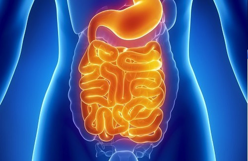 nettoyer son intestin