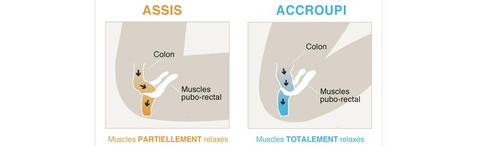 Soulager le muscle périnée grâce au tabouret physiologique de toiletets