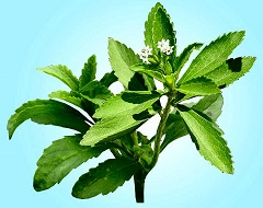 édulcorant Stevia